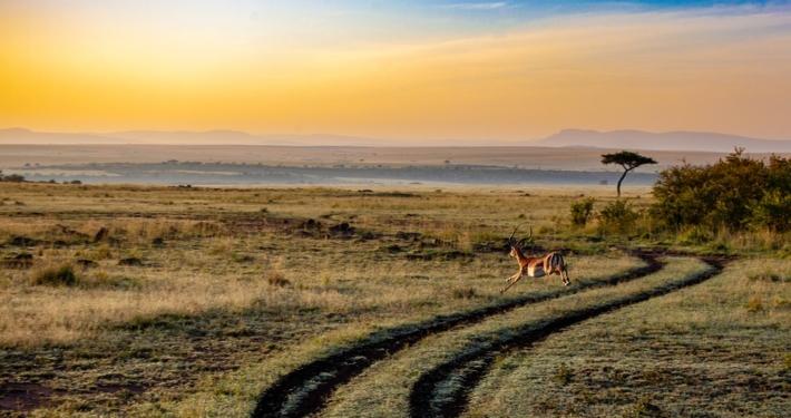 antilope afrique